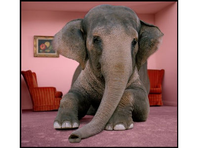 The Elephant Is in the Living Room!