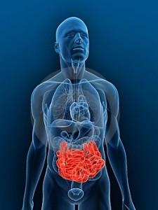 3d-intestinal-tract-225x300