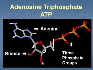 ATP_molecule