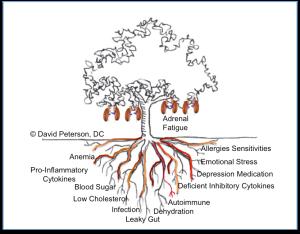 adrenal-fruit1